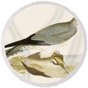 Pale Chested Harrier Round Beach Towel by English School