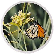 Round Beach Towel featuring the photograph Palm Springs Monarch by Kyle Hanson