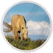 Palomino Wild Stallion In The Evening Light Round Beach Towel