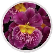 Pansy Orchid Round Beach Towel by Garry Gay