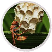 Paper Wasps 00666 Round Beach Towel by Kevin Chippindall