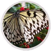 Round Beach Towel featuring the photograph Paper White Butterfly by Bruce Bley