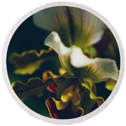 Round Beach Towel featuring the photograph Paphiopedilum Villosum Orchid Lady Slipper by Sharon Mau