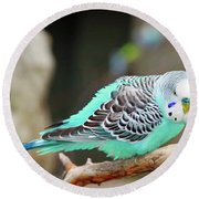 Parakeet  Round Beach Towel