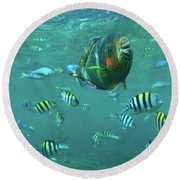 Parrot Fish Round Beach Towel