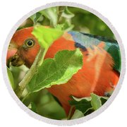 Round Beach Towel featuring the photograph  Parrot In Apple Tree by Werner Padarin