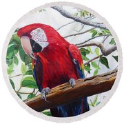 Parrot Portrait Round Beach Towel by Marilyn  McNish