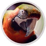 Parrot Selfie Round Beach Towel