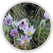 Round Beach Towel featuring the photograph Pasqueflower by Michal Boubin