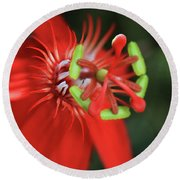 Round Beach Towel featuring the photograph Passiflora Vitifolia Scarlet Red Passion Flower by Sharon Mau