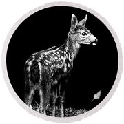 Round Beach Towel featuring the photograph Passing Fawn by Adria Trail