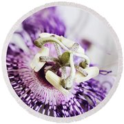 Passion Flower Round Beach Towel by Stephanie Frey