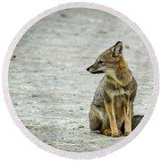 Patagonia Fox - Argentina Round Beach Towel