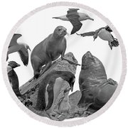 Patagonian Wildlife Round Beach Towel