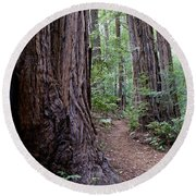 Pathway Through A Redwood Forest On Mt Tamalpais Round Beach Towel