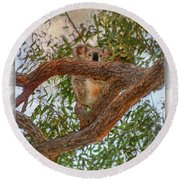 Round Beach Towel featuring the photograph Patience Brings Koalas by Hanny Heim