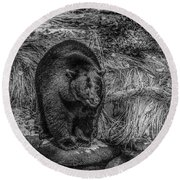 Patient Black Bear Round Beach Towel