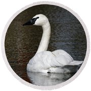 Peaceful Swan Round Beach Towel