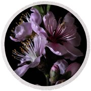 Peach Tree Blossom Two Round Beach Towel
