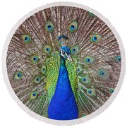 Round Beach Towel featuring the photograph Peacock Displaying His Plumage by Jim Fitzpatrick