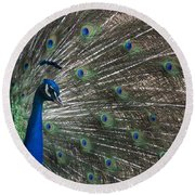 Peacock II Round Beach Towel by Lisa L Silva