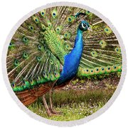 Peacock In Beacon Hill Park Round Beach Towel by Peggy Collins