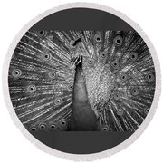 Peacock In Black And White Round Beach Towel