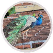 Peacock On Rooftop Round Beach Towel