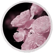 Peacock Pink Cabbage Roses On Black Round Beach Towel