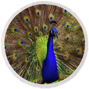 Round Beach Towel featuring the photograph Peacock Showing Breeding Plumage In Jupiter, Florida by Justin Kelefas