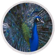 Round Beach Towel featuring the photograph Peacock Splendor by Marie Hicks