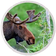 Round Beach Towel featuring the photograph Peaking Moose by Scott Mahon
