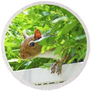 Peek-a-boo Gray Squirrel Round Beach Towel
