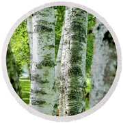 Round Beach Towel featuring the photograph Peek A Boo Birch by Greg Fortier