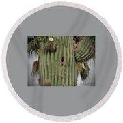 Peek-a-boo Cactus Wren Round Beach Towel