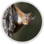 Peekaboo - Red Squirrel #29 Round Beach Towel