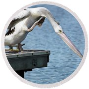 Pelican Beauty 66633 Round Beach Towel by Kevin Chippindall