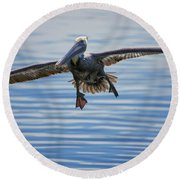 Pelican On Approach Round Beach Towel