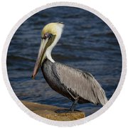 Round Beach Towel featuring the photograph Pelican Profile 2 by Jean Noren