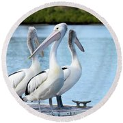 Pelicans 6663. Round Beach Towel by Kevin Chippindall