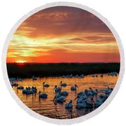 Pelicans At Sunrise Round Beach Towel by Rob Graham