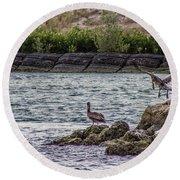 Pelicans  Round Beach Towel by Nance Larson