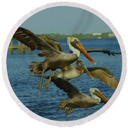 Pelicans Three Amigos Round Beach Towel by Larry Nieland