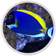 Blue Tang Fish  Round Beach Towel