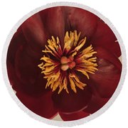 Round Beach Towel featuring the photograph Penny Peony by Marsha Heiken