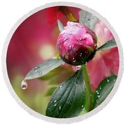 Peony Bud And  Refractions Round Beach Towel