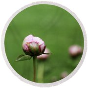 Peony Bud On Greenery Round Beach Towel