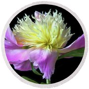 Peony On Black Round Beach Towel