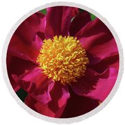 Round Beach Towel featuring the photograph Peony Pixie Dust by Rachel Cohen