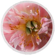 Peony Radiant In Pink Round Beach Towel by Dora Sofia Caputo Photographic Art and Design